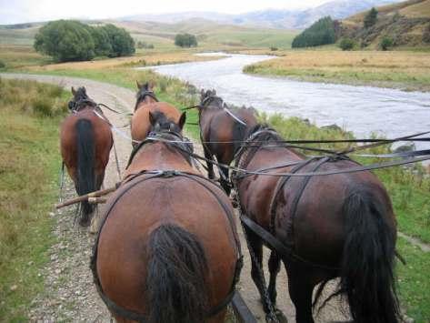caval-cade-0411