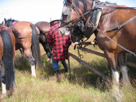 caval-cade-1051